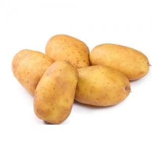 连云港土豆